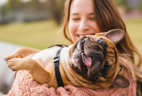 Can Owning a Pet Boost Your Mental Health - Lifeworks Counseling Center